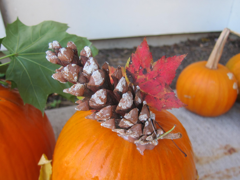 No-Carve Nature Pumpkins (11)