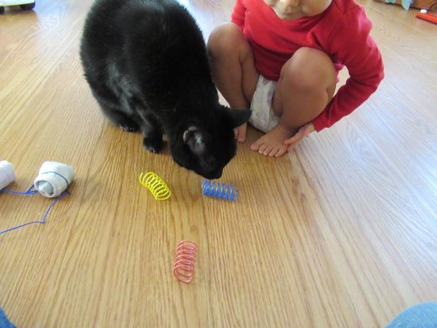 Cat Games (12)