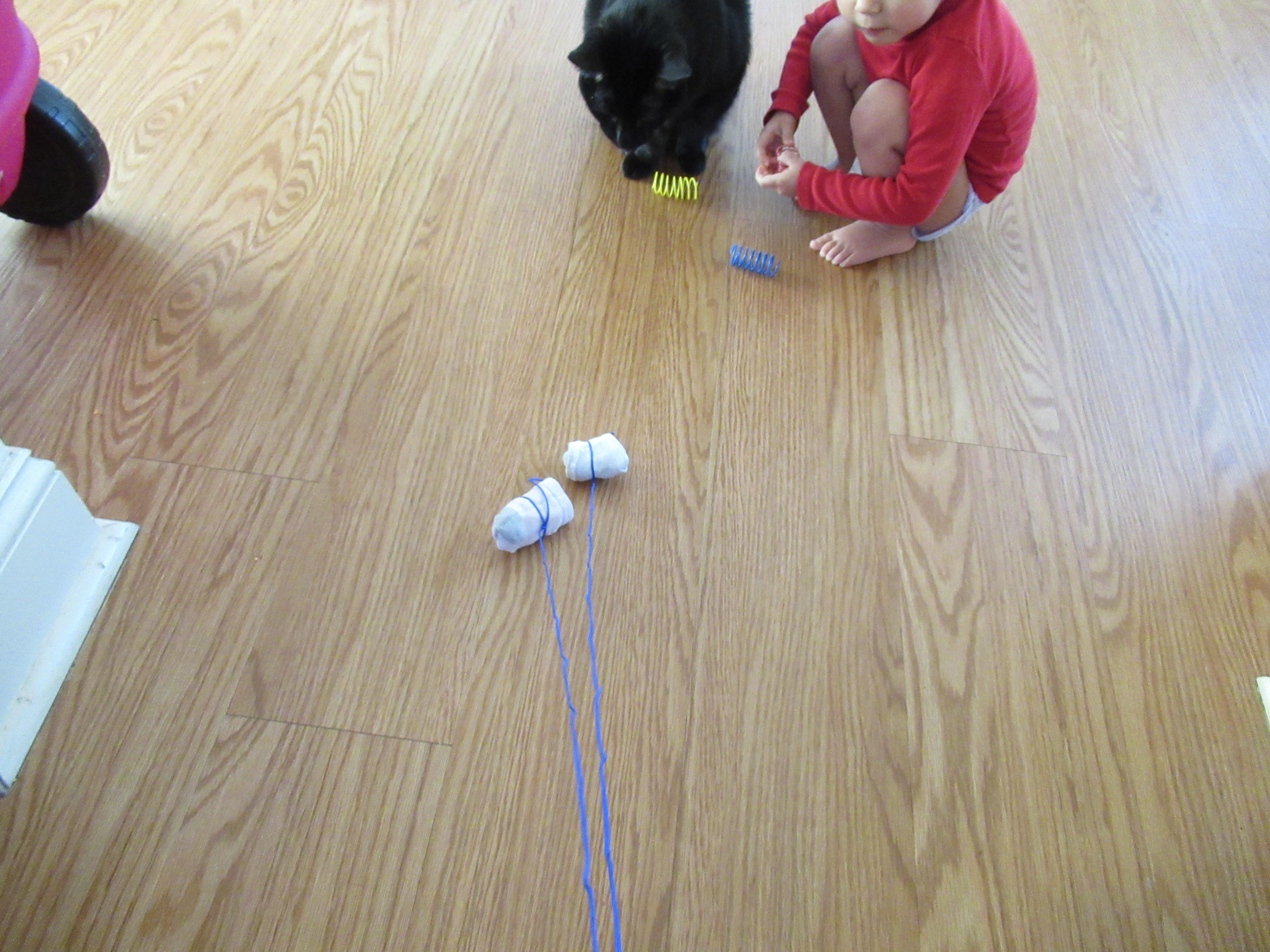 Cat Games (13)