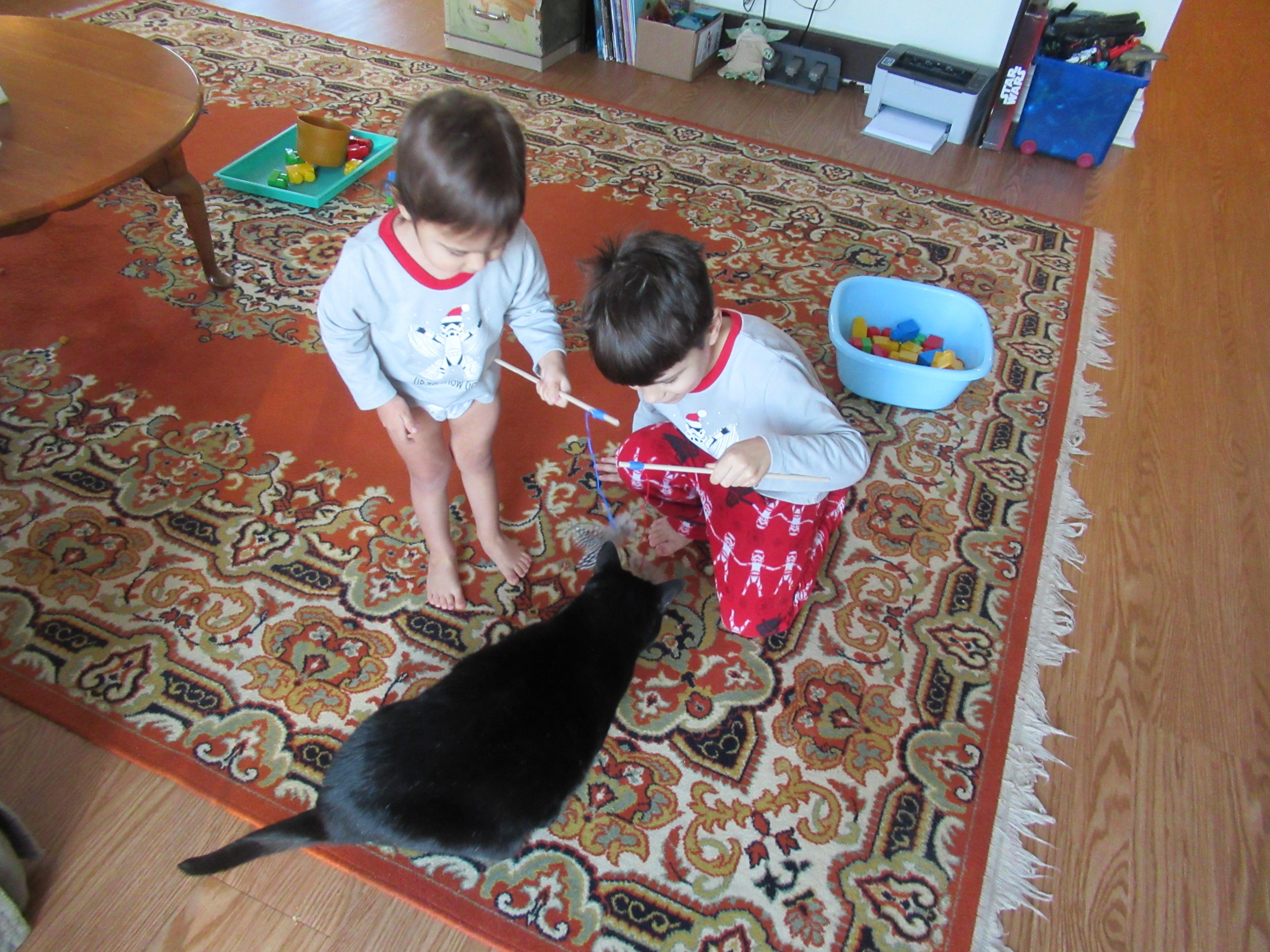 Cat Games (3)