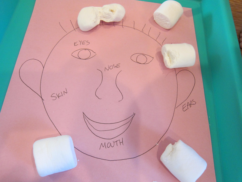 Marshmallow Senses (8)