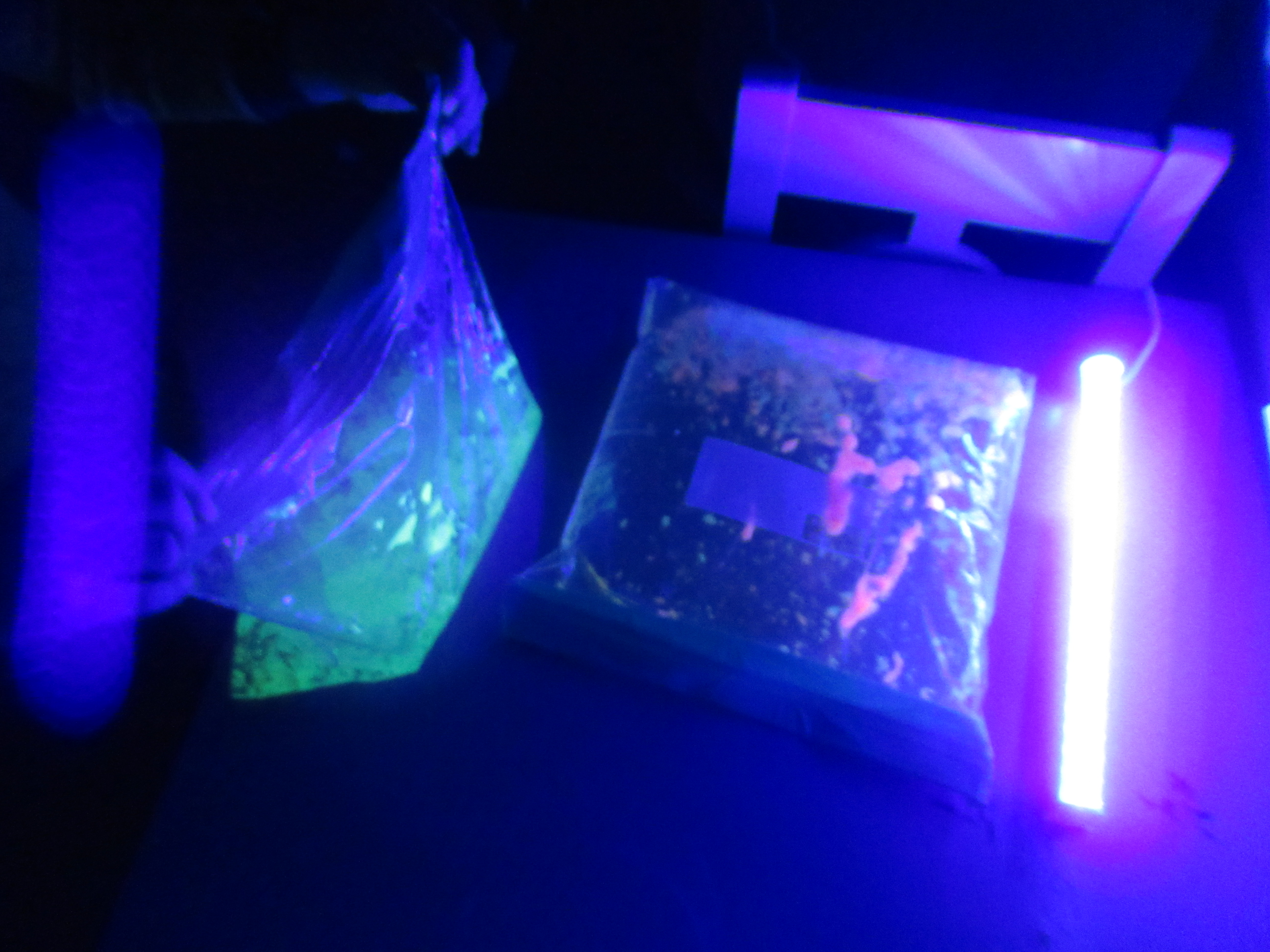 Glowing Colors Bag (7)