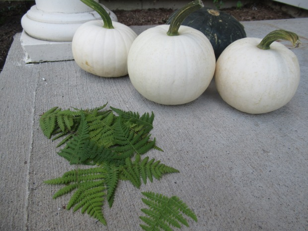 Fern Pumpkins (1)