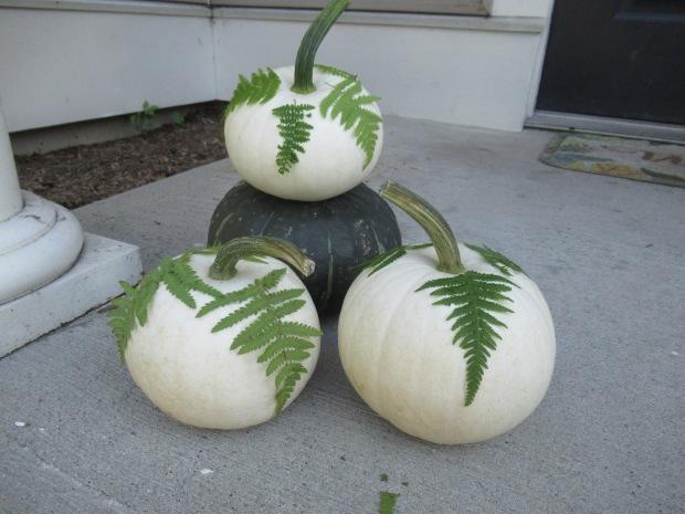 Fern Pumpkins (2)