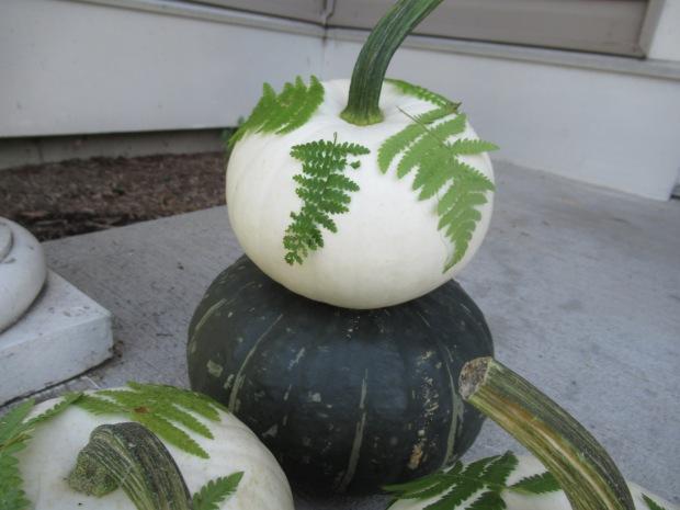 Fern Pumpkins (3)