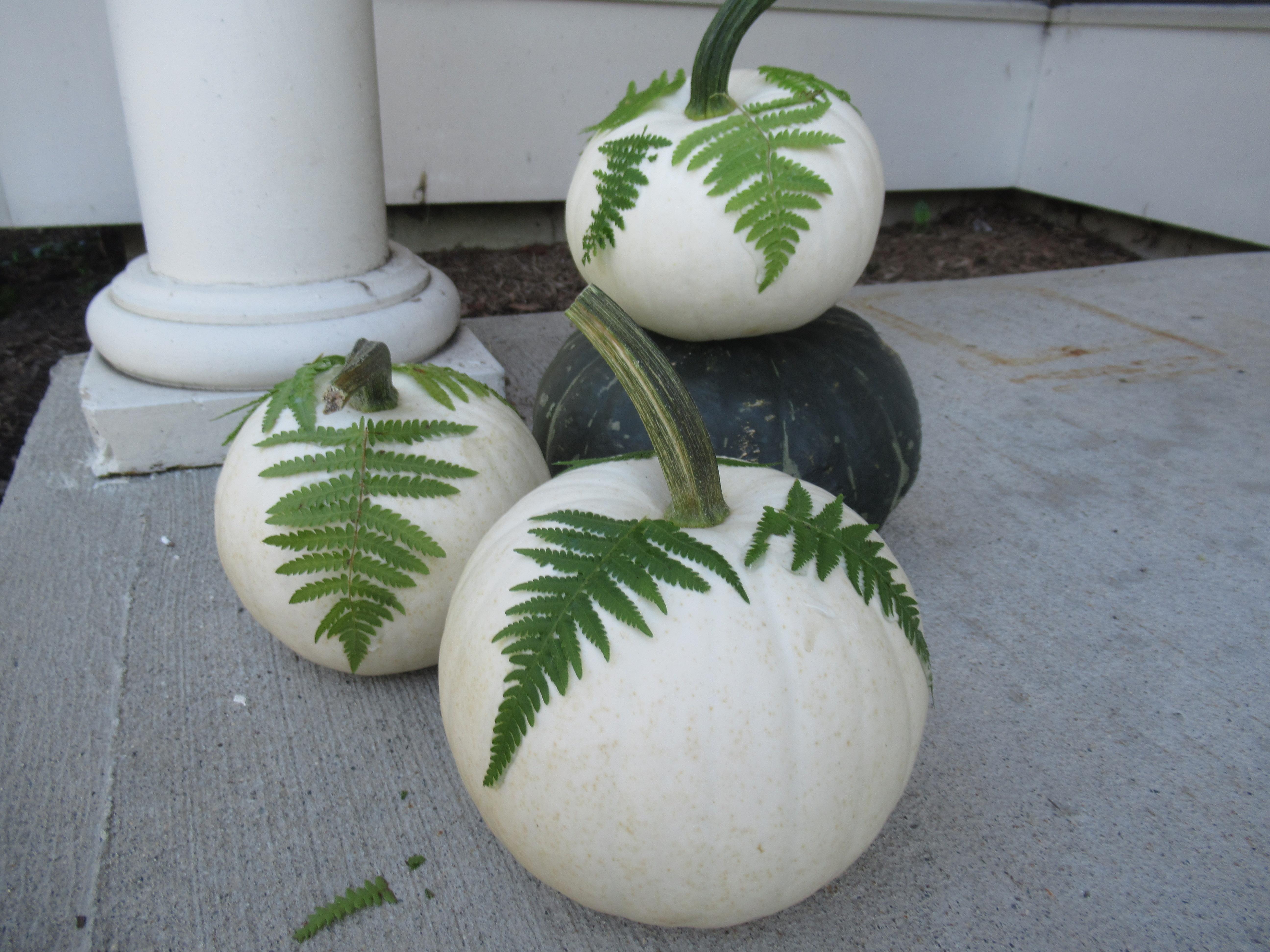 Fern Pumpkins (4)